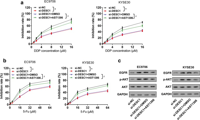 DESC1 inhibited chemotherapy resistance of ESCC cells via EGFR/AKT. EC9706 or KYSE30 cells were divided into four groups: si-NC, si-DESC1, si- DESC1 + DMSO, and si-DESC1 + AST1306 (EGFR inhibitor, 1 μM,24 h) groups. a After the treatment of cisplatin (0, 1, 2, 4, 8, 16 μM) for 48 h, si-DESC1 promoted chemotherapy resistance of ESCC cells, while AST1306 reversed this effect. b After the treatment of 5-Fu (0, 1, 4, 16, 32, 64 μM) for 48 h, si-DESC1 promoted chemotherapy resistance of ESCC cells, while AST1306 reversed this effect. c si-DESC1 upregulated the expressions of EGFR and p-AKT, while AST1306 reversed this effect