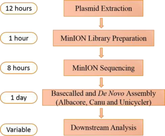 Workflow and time span overview of the MinION nanopore sequencing and assembly process. This workflow was based on the rapid barcoding sequencing kit, which could pool 12 samples in a single run. The time for basecalling and de novo assembly depended on the computational performance of the computer utilized, and Illumina short reads were needed if Unicycler was used to obtain high-quality assembled plasmids.