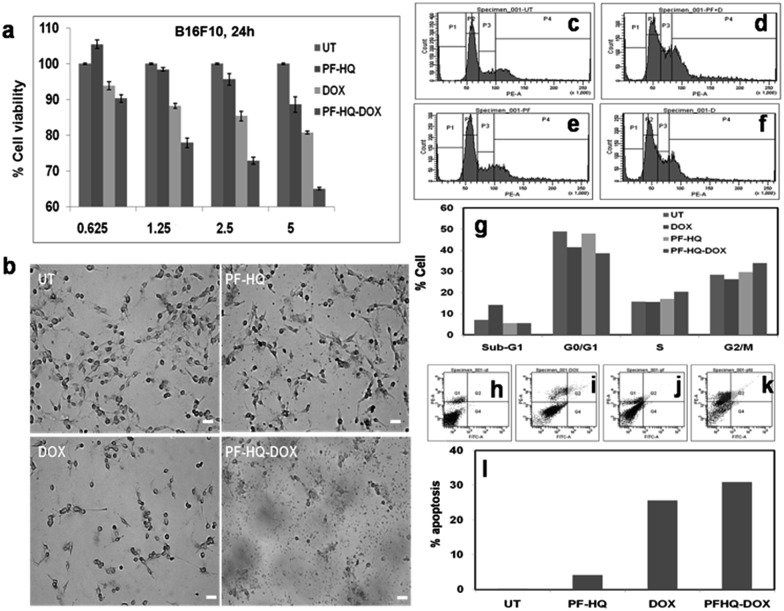 (a) In vitro cell viability assay of B16F10 cancer cells incubated with PF-HQ, <t>DOX,</t> and PF-HQ–DOX in a dose-dependent manner for 24 h of treatment. The numerical value in the abscissa represents the concentration (μM) of DOX treatment. (b) Representative bright field images of B16F10 cells incubated with PF-HQ, DOX (2.5 μM), and PF-HQ–DOX (2.5 μM w.r.t. DOX) for 24 h were taken using an inverted microscope at 10× magnification. Scale bar = 50 microns. (c–g) The total DNA content was analyzed using <t>PI/RNase</t> by FACS in (c) untreated B16F10 cells as a control, and B16F10 cells treated with (d) free DOX (2.5 μM), (e) PF-HQ, or (f) PF-HQ–DOX (2.5 μM w.r.t. DOX) for 24 h. (g) Quantification of cell cycle analysis. (h–l) Analysis of apoptosis by flow cytometry using Annexin V-FITC assay in B16F10 cells treated with (i) DOX (2.5 μM), (j) PF-HQ, and (k) PF-HQ–DOX (2.5 μM w.r.t. DOX). (h) Untreated control cells were kept as a control. (l) Quantification data of apoptosis.