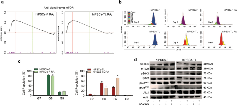 Cell proliferation assay in human iPSCs after RA exposure a GSEA analysis showing enrichment of Akt1/mTOR signature in RA 8 treated cells. hiPSCs-F RA 8 ( p