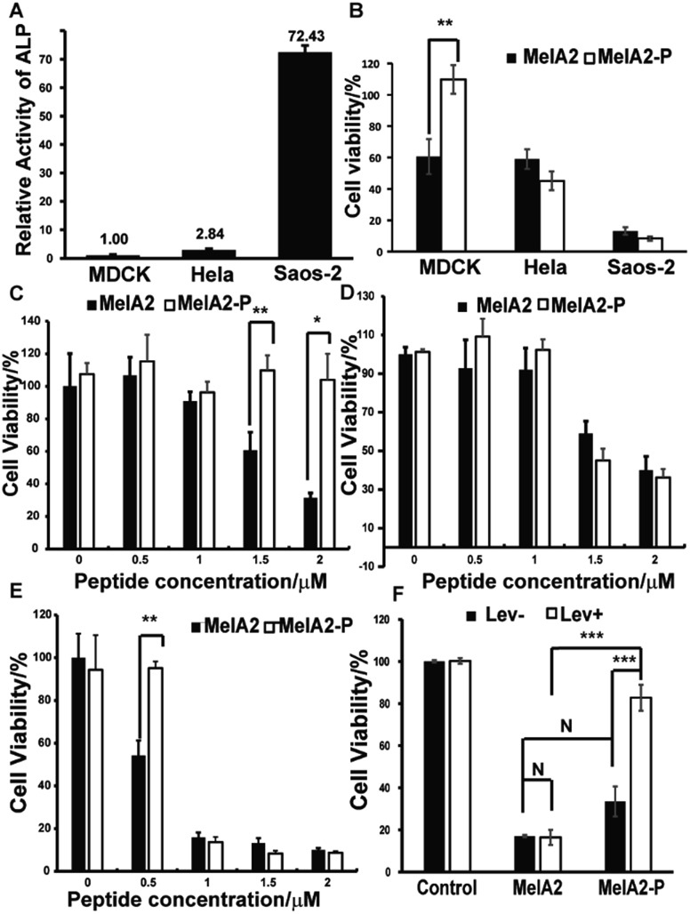 MelA2-P selectively kills cancer cells with high ALP activity. (A) The relative ALP activity in MDCK, Hela and Saos-2. (B) The cell viability of MDCK, Hela, and Saos-2 cells after treatment with 1.5 μM MelA2 and MelA2-P for 24 h. The cell viability of (C) MDCK, (D) Hela and (E) Saos-2 cells after treatment with different concentrations of MelA2-P and MelA2 for 24 h. (F) The cell viability of Saos-2 after treatment with the ALP inhibitor levamisole and peptides (MelA2 or MelA2-P). The cells in black histograms were not treated by levamisole, and the cells in white histograms were incubated with 0.5 mM levamisole for 3 h before the addition of the mixture of 1 μM peptides (MelA2 or MelA2-P) and 0.5 mM levamisole for 24 h of culturing. For the control group, the peptide treatments were replaced by equivalent buffer. n = 3, * p