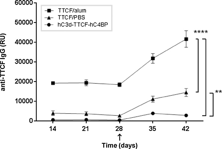 Direct in vivo comparison of the adjuvant effects of hC3d with the conventional adjuvant alum. Three groups (n = 4) of mice were immunized intra-peritoneally with hC3d-TTCF-hC4BP/saline (circles); TTCF/Alum (squares) or TTCF/saline (triangles) containing TTCF molar equivalents of 5 μg/animal, and boosted at day 28 (arrow) following initial immunization. Serum was collected on the days indicated and analysed for the presence of anti-TTCF IgG by ELISA. Average values (relative units (RU)) ± SD are shown. One-way ANOVA Tukey's HSD test was used to define significance levels at 95% confidence (* p