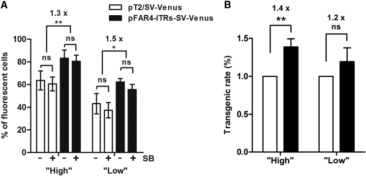 Comparative Analysis of Transfection Efficiency and Transgenic Rate Using the pFAR4 or the <t>pT2</t> Plasmid to Encode the Venus Gene HeLa cells were co-transfected with either a high or a low plasmid amount using the following constructs: pFAR4-ITRs-SV-Venus (2,984 bp, 300 or 50 ng) or an equimolar amount of pT2/SV-Venus (4,878 bp, 490 or 82 ng) either without (−SB) or plus SB100X transposase encoded by the pFAR4 plasmid (30 or 5 ng). Using the pGL3 empty vector, the total amount of plasmid was adjusted to 800 or 500 ng for the high or low conditions, respectively. (A) Data represent the mean number of fluorescent cells ± SD, obtained 2 days after six and four independent transfections for the high and low plasmid amounts, respectively. **p