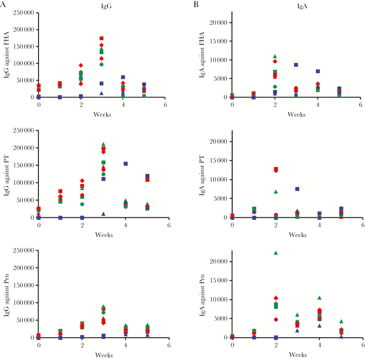 Booster effect of Bordetella pertussis D420 challenge in BPZE1-vaccinated baboons. Immunoglobulin G (IgG) ( A ) and immunoglobulin A (IgA) ( B ) titers were measured against filamentous hemagglutinin (FHA) (upper panels), pertussis toxin (PT) (middle panels), and pertactin (Prn) (lower panels) at the indicated time points after challenge with B. pertussis D420. Each symbol represents an individual animal. Blue, red, and green symbols indicate antibody titers of nonvaccinated animals, baboons vaccinated with 10 9 colony-forming units (CFU) BPZE1, and baboons vaccinated with 10 10 CFU BPZE1, respectively.
