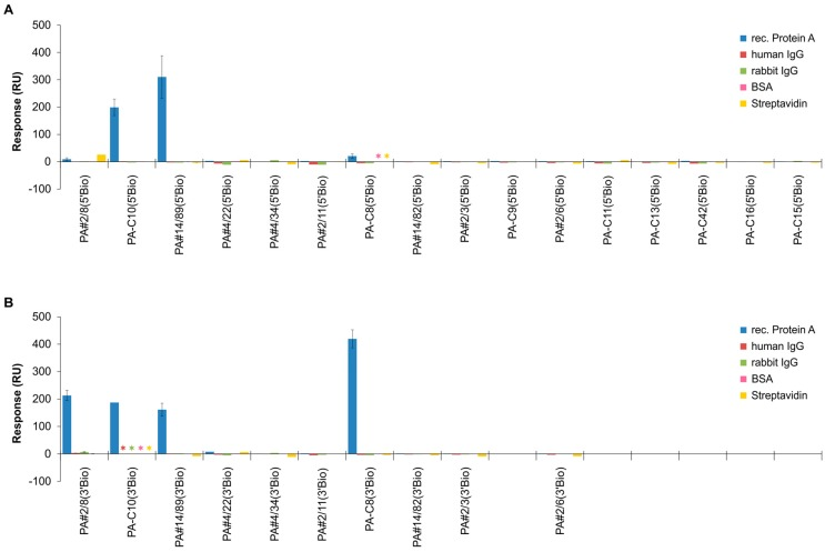 Representative sequences of the 15 identified groups from the NGS pool were screened for their individual binding abilities to Protein A. Comparative SPR-based interaction analyses were performed with the Biacore X100 instrument. <t>Biotinylated</t> aptamers were immobilized via the 5′-end ( A ) or 3′-end ( B ) on the streptavidin-modified sensor surface and 1000 nM <t>Protein</t> A was injected for binding. The sensor responses from the end of the binding phases (after 300 s) are shown. In addition, cross-specificities to other proteins were analyzed. Asterisks indicate if certain interactions have not been investigated.