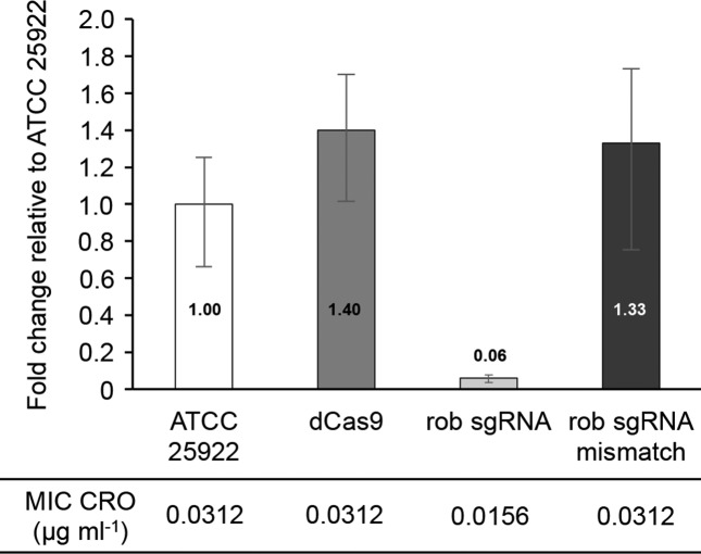 CRISPRi knock-down of the E. coli rob gene. Quantitative RT-PCR showing relative rob expression compared with that in wild-type E. coli ATCC 25922. dCas9, E. coli ATCC 25922 expressing a catalytically dead version of the Cas9 nuclease; rob sgRNA, E. coli ATCC 25922 expressing a catalytically dead version of the Cas9 nuclease and a single guide RNA against the rob gene; rob sgRNA mismatch, E. coli ATCC 25922 expressing a catalytically dead version of the Cas9 nuclease and an inactive version of the single guide RNA against the rob gene. All qRT-PCR data were normalized according to the amplification signals of the housekeeping tuf mRNA. MICs for CRO measured by agar dilution are shown for all strains. Error bars indicate the standard deviation for the triplicate measurements.