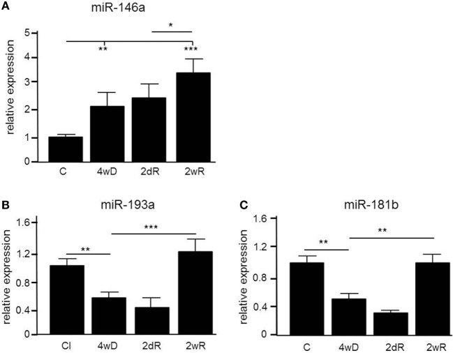 Differential expression of microRNAs (miRNAs) in the corpus callosum of mice during experimental demyelination and remyelination. Using microarray and validation by quantitative PCR (qPCR), three miRNAs, miR-146a (A) , miR-193a (B) and miR-181b (C) were differentially regulated in response to CPZ exposure in the corpus callosum. * p