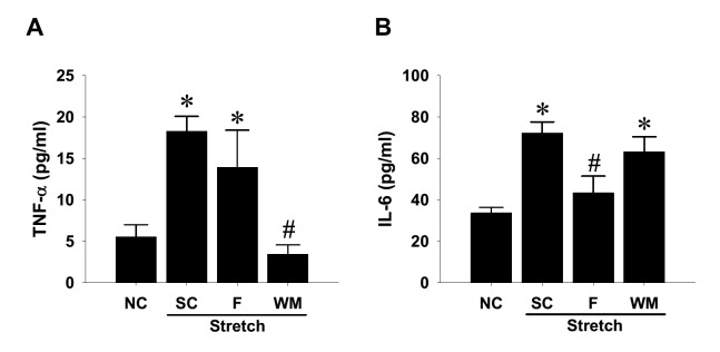 Involvement of signaling pathways in cyclic mechanical stretch-increased cytokine production in rat aortic smooth muscle cells (SMCs) SMCs were seeded on fibronectin-coated silicone elastomer chambers till full attachment. The cells were treated with selective kinase inhibitors at 10 μM or 0.1% DMSO solvent control (SC) for 1 h, followed by uniaxial and cyclic 10% stretches at constant frequency (1 Hz) for 24 h. Conditioned media from the stretched SMCs and nonstretching control (NC) were collected after consecutive 24-h stretching and subjected to ELISA detectionof TNF-α ( A ) and IL-6 ( B ). Data are shown in mean ± SEM; * P