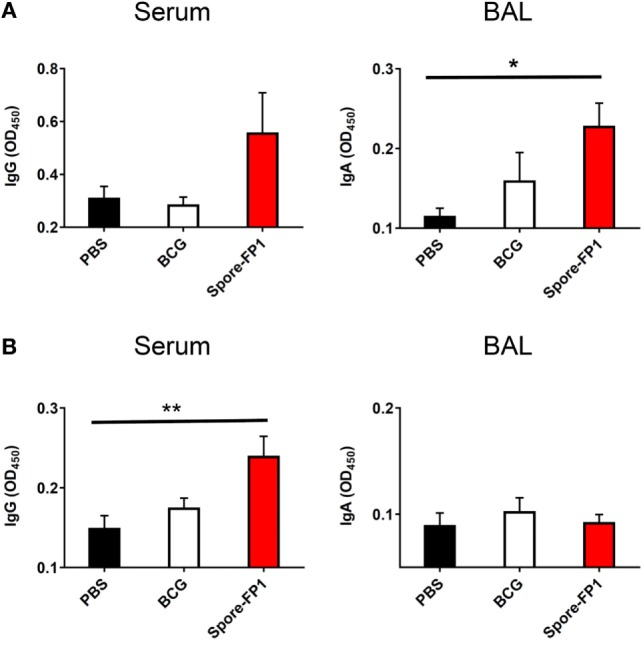 Enhanced humoral immunity caused by Spore-FP1. Immunized mice were tested for the presence of antigen-specific <t>IgG</t> in the serum (1:1,000 dilution) and <t>IgA</t> in the BAL (1 mL PBS flush; 1:10 dilution) by ELISA, with optical density read at 450 nm in duplicate. (A) Levels of IgG and IgA specific to Ag85B. (B) Levels of IgG and IgA specific to ACR. Results are expressed as mean ± SEM. Data shown are derived from n = 3 individual mice and are representative of two independent experiments. Significance was tested against the unstimulated control by one-way ANOVA with Tukey's posttest, * p
