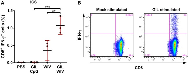 Comparison of CD8 + T cell responses induced by 1 nmol GIL peptide adjuvanted with either 50 µg CpG or 50 µg whole-inactivated influenza virus (WIV). HLA-A2.1 transgenic mice were injected twice, 3 weeks apart with PBS (negative control), WIV or GIL peptide with indicated adjuvant. Shown are the responses 2 weeks after the final immunization. (A) Splenocytes were re-stimulated with GIL peptide and stained for intracellular cytokine IFN-γ. The percentages for IFN-γ + CD8 + T cells acquired by FACS are plotted. Data are shown as mean ± SD of three mice per group, each circle is a single replicate and data are from a single experiment representative of two individual experiments. ** p