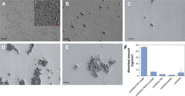 Scanning electron micrographs of Ti plates functionalized with oxSWNHs/TBP–NHBP. ( A – E ) Ti plates were functionalized with oxSWNHs/TBP–NHBP ( A ), oxSWNHs ( B ), oxSWNHs/TBP(R-A)-NHBP ( C ), oxSWNHs/TBP ( D ), or oxSWNHs/NHBP ( E ). The inset shows magnified sections. Black scale: 20 µm; red scale: 2 µm. ( F ) Adsorption amounts measured using an electronic balance. Abbreviations: oxSWNHs, oxidized single-walled carbon nanohorns; TBP, Ti-binding peptide; NHBP-1, SWNH-binding peptide.