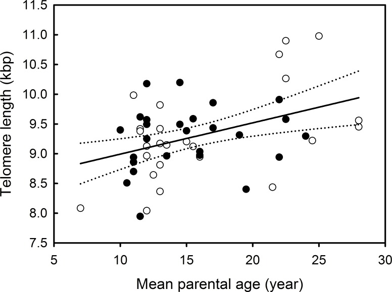 Relationship between offspring telomere length and mean parental age in Black-browed albatrosses. Filled and open circles respectively represent females and males. The solid line represents the relationship between offspring telomere length and parental age. The dotted lines represent the 95% confidence intervals for the relationship between offspring telomere length and mean parental age.