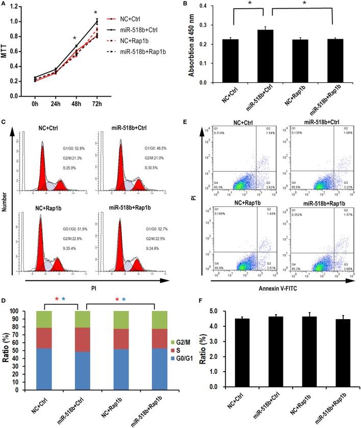 miR-518b transfection accelerates the cell proliferation. (A) MTT assay to measure the cell viability in HTR8/SVneo cells. The cells were transfected with miR-518b together with Rap1b overexpression plasmid, and MTT assays were performed at 24, 48, and 72 h after transfection. (B) BrdU incorporation assay to measure the cell proliferation in HTR8/SVneo cells transfected with Rap1b overexpression plasmid. (C,D) Cell cycle assay for HTR8/SVneo cells transfected with Rap1b overexpression plasmid. (E,F) Costaining of propidium iodide (PI) and FITC-Annexin V for cell death/apoptosis assay for HTR8/SVneo cells transfected with Rap1b overexpression plasmid. MTT assay was replicated for five times, and other tests were replicated for three times. Data are presented as mean ± SEM. * P