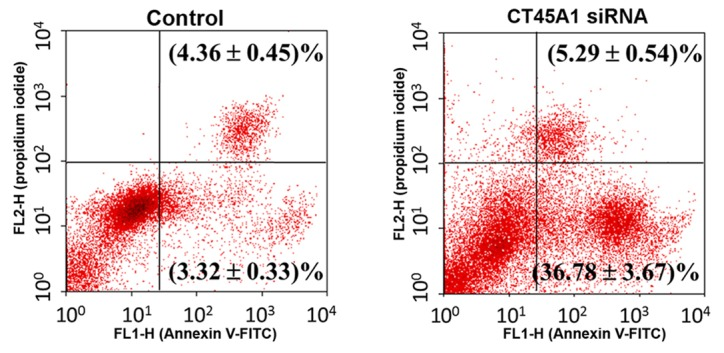 Apoptosis in A549 cells transfected with CT45A1 siRNA and negative control was determined by Annexin V-FITC/propidium iodide staining and flow cytometry. CT45A1, cancer-testis antigen family 45 member A1; siRNA, small interfering RNA; FITC, fluorescein isothiocyanate.