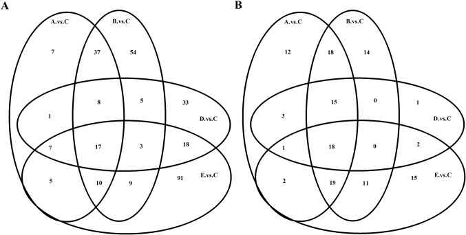 Venn diagram of differentially expressed (A) mRNAs and (B) miRNAs. Control: Group A (n=7) and group B (n=8). Model: Group C (n=8), group D (n=10) and group E (n=9). When mRNAs or miRNAs exhibit similar characteristics, they appear in the overlapping boxes. mRNA, messenger RNA; miRNA, microRNA.