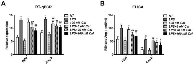 Cal suppresses REN and Ang II levels in LPS-treated rat PMVECs. (A) RT-qPCR analysis of REN and Ang II mRNA expression in rat PMVECs in various treatment groups. (B) Levels of REN and Ang II in the culture medium of rat PMVECs were quantified by ELISA. Data are presented as the mean + standard deviation of three biological replicates. *P