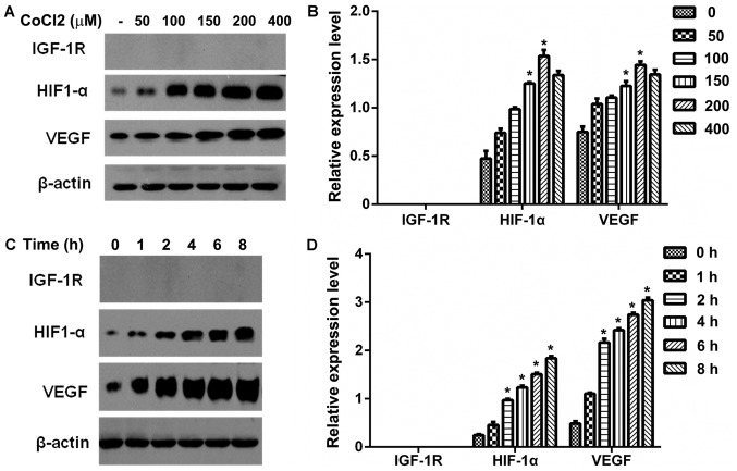 Effect of CoCl 2 -induced hypoxia on IGF-1R, HIF-1α and VEGF protein expression in HepG2 cells. (A) Serum-starved IGF-1R knockout HepG2 cells were treated with different concentrations of CoCl 2 (0, 50, 100, 150, 200 and 400 µM) for 6 h. IGF-1R, HIF-1α and VEGF protein expression were detected by western blot analysis. (B) Western blot analysis data was quantified and the protein expression of IGF-1R, HIF-1α and VEGF are presented as a bar graph. *P