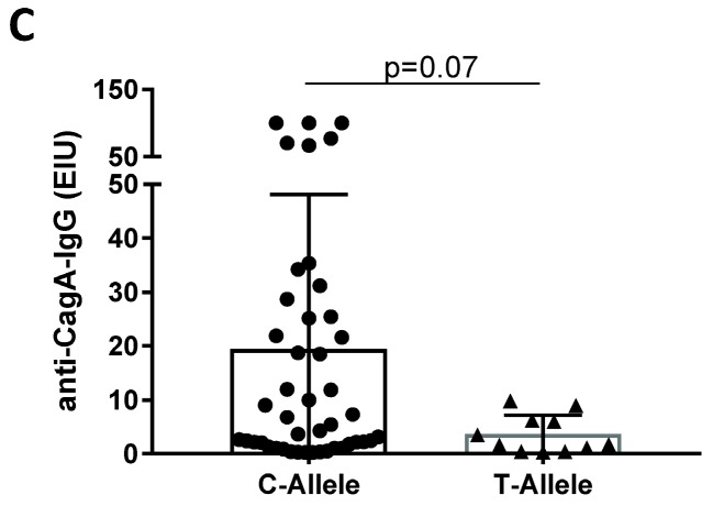 H. pylori and anti-CagA-seropositivity in relation to IL28B SNP. ( A ) Anti- H. pylori -IgG in IL28B C/C, C/T and T/T genotypes. ( B ) Anti-CagA-IgG in IL28B C/C, C/T, and T/T genotypes. ( C ) Anti-CagA-IgG in IL28 B C- and T-alleles. Two groups were compared using a Mann–Whitney test and more than two groups using a Kruskal–Wallis multiple comparison test.