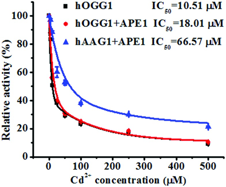 Variance of the relative catalytic activity with different concentrations of Cd 2+ for hOGG1 alone (black line), hOGG1 + APE1 (red line) and hAAG + APE1 (blue line). The Cy3-labeled molecular beacon (0.3 μM), the Cy5-labeled molecular beacon (0.3 μM), hOGG1 (0.1 U μL –1 ), hAAG (0.1 U μL –1 ) and APE1 (0.1 U μL –1 ) were used in this research. The error bars represent the standard deviations of the three experiments.