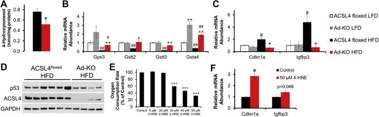 Adipocytes from Ad-KO mice fed HFD are protected against increased 4-HNE production, reductions in glutathione-mediated detoxification gene expression, and 4-HNE mediated p53 activation . (A) Isolated adipocyte 4-HNE content as determined by two-way ANOVA. *p ≤ 0.05 ACSL4 fl oxed vs. Ad-KO within diet. (B) Glutathione-mediated detoxification genes of interest in isolated gonadal adipocytes of 20-week old male ACSL4 floxed or Ad-KO mice fed LFD or HFD for 12 weeks RNA expression quantified by real-time PCR relative to Cyclophilin A. n = 5–8 mice per group. *p ≤ 0.05 ACSL4 floxed vs. Ad-KO within diet; **p ≤ 0.0125 ACSL4 floxed vs. Ad-KO within diet; #p ≤ 0.05 LFD vs. HFD within genotype; ##p ≤ 0.0125 LFD vs. HFD within genotype; Student's t-test with Bonferroni correction for 4 comparisons. (C) p53 downstream target genes in isolated gonadal adipocytes of 20-week old male ACSL4floxed or Ad-KO mice on LFD or HFD for 12 weeks RNA expression quantified by real-time PCR relative to Cyclophilin A. n = 5–7 mice per group. *p