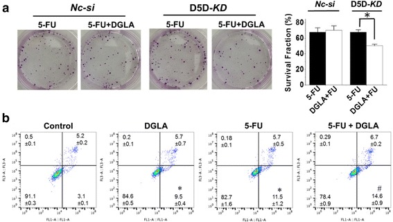 D5D- KD and DGLA supplementation enhance the efficacy of 5-FU on growth of 4 T1 cells. a Colony formation assay of D5D- KD 4 T1 cells or control siRNA transfected cells at 10 days with treatment of 5-FU (20 μM) or 5-FU + DGLA (100 μM) for 48 h. Note, D5D- KD and NC-si control cells without DGLA and 5-FU treatment (shown in Fig. 3 ) were used to calculate survival fractions; and b Cell apoptosis was examined via flow cytometry after D5D- KD 4 T1 cells were treated with DGLA (100 μM), 5-FU (20 μM), or 5-FU + DGLA for 48 h, followed by Annexin V-FITC/PI double staining Data represent as mean ± standard deviation (*: significant difference vs. control with p