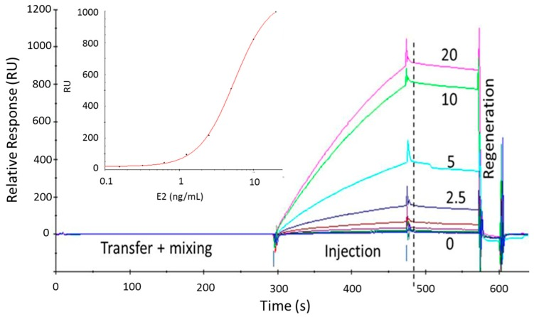 Referenced SPR sensorgrams obtained in the Biacore 3000 with E2 concentrations ranging from 0 to 20 ng/mL. The standard solutions in 20% methanol and the wt-ERα LBD in <t>HBS-EP</t> (10 mM <t>Hepes,</t> 150 mM NaCl, 3 mM EDTA, 0.005% Tween-20) buffer were transferred and mixed in the Biacore (1:1; v / v ). Of this mixture, 90 μL was injected over the peptide-coated sensor surface at a flow rate of 30 μL/min using HBS-EP as running buffer. After the injections, the responses were measured (dotted line) and used for the construction of the calibration curve (insert). The binding of the ER was regenerated by the injection of 10 mM NaOH for 0.5 min. The total time of each cycle was 11 min of which 5 min were used for the transfer and mixing.