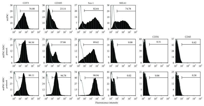 Immunophenotype of the miPSC-MSC. Representative flow cytometry analyses of primary mouse bone marrow MSC (mMSC), noninduced miPSC (miPSC), miPSC induced to differentiate into MSC presorting (miPSC-MSC presort) and after sorting for CD105+, and SSEA1 cells (miPSC-MSC after sort). MSC-related markers CD73, CD105, and Sca-1, pluripotency marker SSEA1, and haematopoietic markers CD34 and CD45 were assessed (solid histogram) relative to their respective isotype controls (open histogram).