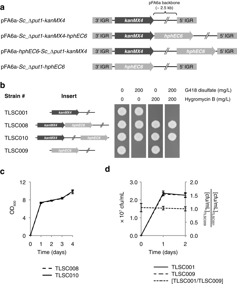 Assaying interactions and relative fitness between kanMX4 and hphEC6 selection markers. a Outline of linearized constructs used in interaction assays. Plasmid elements are not drawn to scale. b Tolerance of yeast strains to combinations of G418 sulfate and hygromycin B. Strains were pre-cultured overnight in 3 mL YM broth with either 200 mg/L G418 disulfate (TLSC001), 200 mg/L <t>hygromycin</t> B (TLSC009), or 200 mg/L of both selection agents (TLSC008 and TLSC010). Pre-cultures were diluted to OD 600 0.1 in fresh YM broth without any selection agent. 2 μL cell suspension of each strain was spotted on solid YM medium with the indicated concentration of G418 disulfate and hygromycin B. Plates were incubated for 2 days at 30 °C and then photographed. c Comparative growth dynamics in MMD broth containing both G418 disulfate and hygromycin B. Error bars indicate one standard deviation. d Fitness equivalence of co-cultivated S. cerevisiae Δput1 strains carrying either the kanMX4 or hphEC6 marker under non-selective conditions. Error bars indicate one standard deviation