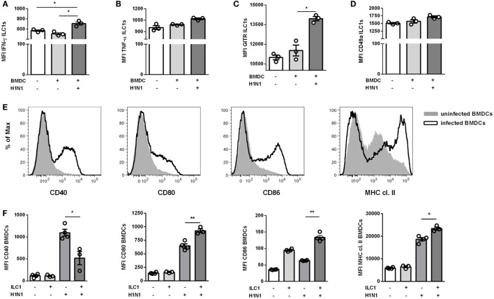 ILC1s are engaged in cross-talk with DCs during H1N1 infection in vitro . BMDCs generated from wild-type mice using the FLT-3 ligand stimulation were infected with the H1N1 PR8 strain (at a MOI of 1). In vitro -generated ILC1s cultured overnight with infected or uninfected BMDCs at a 1:1 ratio were stained for flow cytometry analysis after 3 h incubation in media with brefeldin and monensin. MFI of ILC1s expressing (A) IFN-γ, (B) TNF-α, (C) GITR, and (D) CD49a upon coculture with H1N1-infected or uninfected BMDCs. (E) Representative histograms for the expression of CD40, CD80, CD86, and MHC cl. II on infected BMDCs. (F) MFI of CD11c + BMDCs expressing CD40, CD80, CD86, and MHC cl. II after coculture with ILC1s. Bars with scatter plots represent the mean ± SEM ( n = 3–4) and MFI data are representative from one out of three independent experiments. Asterisks denote significant values as calculated by nonparametric Kruskal–Wallis test (Dunn's posttest); **** p ≤ 0.0001; *** p ≤ 0.001; ** p ≤ 0.01; * p ≤ 0.05.