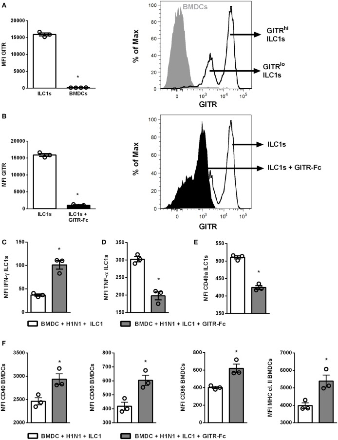 GITR-expression modulates ILC1 functionality upon coculture with H1N1-infected BMDCs. BMDCs generated from wild-type mice using FLT-3 ligand stimulation were infected with the H1N1 PR8 strain (at a MOI of 1). In vitro -generated ILC1s were cocultured overnight with infected or uninfected BMDCs at a 1:1 ratio. The recombinant mouse GITR-Fc chimera protein was applied to the coculture overnight to manipulate GITR expression. Surface and cytokine staining were performed for flow cytometry analysis after 3 h of incubation in media with brefeldin and monensin. (A) GITR expression by ILC1s and BMDCs represented as MFI and representative histogram. (B) MFI of GITR expression by ILC1s with and without GITR-Fc treatment and representative histogram. MFI of (C) IFN-γ, (D) TNF-α, and (E) CD49a expression after GITR-Fc treated ILC1s cocultured with H1N1-infected BMDCs. (F) MFI of <t>CD40,</t> CD80, CD86, and MHC cl. II expression by infected BMDCs post-GITR-Fc treatment. Bars with scatter plots represent the mean ± SEM ( n = 3–4) and MFI data are representative from one out of two independent experiments. Asterisks denote significant values as calculated by nonparametric Mann–Whitney's test; **** p ≤ 0.0001; *** p ≤ 0.001; ** p ≤ 0.01; * p ≤ 0.05.