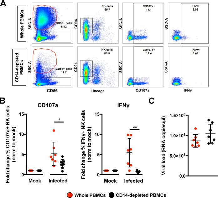 Role of monocytes in NK cell activity. Full PBMCs and CD14-depleted PBMCs (2 × 10 6 cells per infection) were infected with Zika virus (ZIKV) at an MOI of 10 and harvested at 36 hpi. (A) Gating strategy of CD94 + CD56 + Lineage − NK cells and their expression of CD69, CD107a, and IFN-γ. Plots from one representative donor are shown. The red circle indicates the presence or absence of CD14 + monocytes. (B) Compiled percentages of CD107a- and IFN-γ-positive NK cells (depicted in panel A) as normalized to the respective mock sample. (C) Viral load in the infected cells. Data shown were derived from seven donors. Lineage markers CD3, CD19, CD20, and CD14 have been included to rule out the presence of non-NK cells. All data are presented as means ± standard deviations. *, P