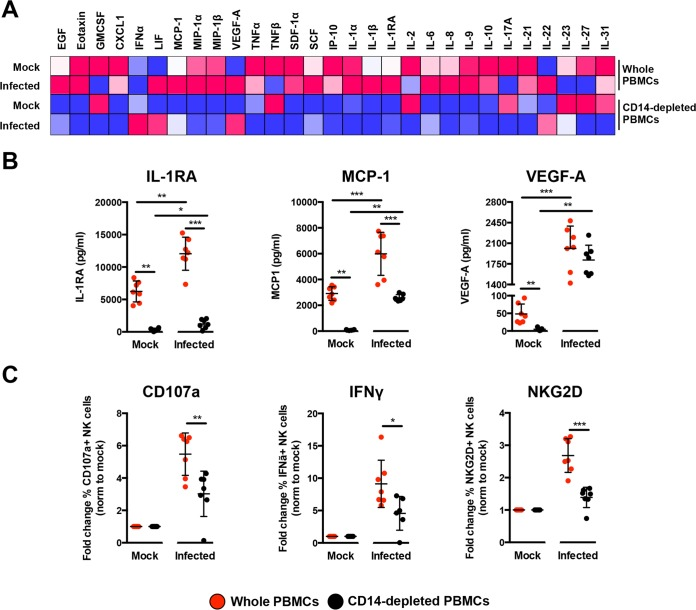 Immune profiling of <t>ZIKV-infected</t> <t>PBMCs.</t> (A) Immune mediators in the culture supernatant of ZIKV-infected PBMCs and CD14-depleted PBMCs were quantified with a 45-plex microbead assay. Concentrations were scaled between 0 and 1. (B) Bar charts of three cytokines, levels of which were significantly affected by both the depletion of CD14 + monocytes and ZIKV infection. (C) Stimulatory capacity of the culture supernatants was further evaluated with freshly isolated PBMCs. Culture supernatant was added in a ratio of 1:10, and cells were harvested at 36 h poststimulation. Compiled percentages of CD107a-, IFN-γ-, and NKG2D-positive CD94 + CD56 + NK cells are shown as normalized to the respective mock sample. Data displayed were derived from seven donors. Lineage markers CD3, CD19, CD20, and CD14 have been included to rule out the presence of non-NK cells. All data are presented as means ± standard deviations. *, P