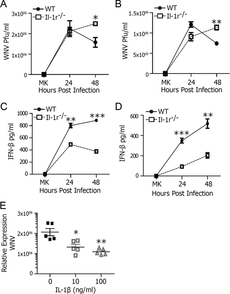 IL-1 signaling is required for WNV control. BMDCs (A, C) or BMMs (B, D) from WT or Il-1r −/− mice were infected with WNV at an MOI of 2.5 and compared with mock-infected cells. At 24 and 48 h, WNV titers were determined by plaque assay (A, B) and IFN-β levels were measured by ELISA (C, D). (E) IL-1β (0, 10, or 100 ng/ml) was titrated onto WT BMDCs 24 h prior to infection with WNV at an MOI of 2.5. WNV RNA was measured by qRT-PCR at 48 h p.i. The data are averages of three (A to D) or five (E) independent experiments. Asterisks indicate values that are statistically significantly different by Mann-Whitney U test (A, B) or by unpaired t test (C to E) (*, P