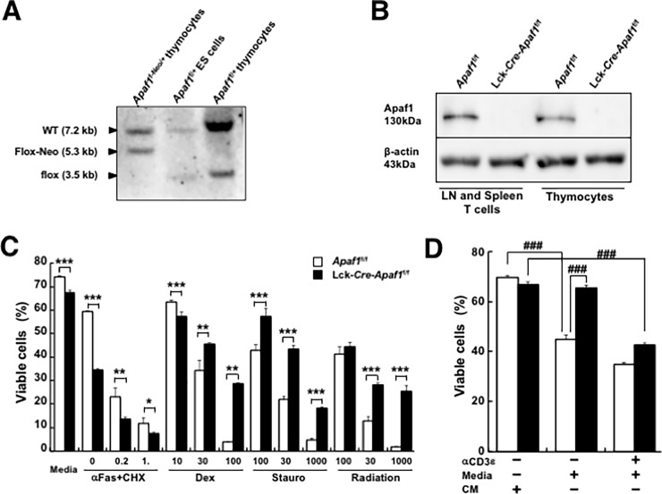 Generation of T cell-specific Apaf1-deficient mice. (A) Southern blot analysis of genomic DNA from Apaf1 f-Neo/+ thymocytes (left), Apaf1 f/+ thymocytes (right), and Apaf1 f/+ ES cells, in which Neo gene was removed by transient expression of FLPe recombinase (middle). DNA was digested with EcoRI and detected with the probe at exon 4. (See S1 Fig for detail.) (B) Western blot analysis of proteins from LN T cells and thymocytes of Apaf1 f/f mice and Lck- Cre - Apaf1 f/f mice. (C) Thymocytes from Apaf1 f/f mice (open columns) or Lck- Cre - Apaf1 f/f mice (closed columns) were stimulated with indicated doses of anti-Fas antibodies plus cycloheximide (αFas + CHX), dexamethasone (Dex), staurosporine (Stauro), γ-irradiation, or left untreated. Apoptotic cells were detected by flow cytometry. (D) Purified T cells from LN of Apaf1 f/f (open columns) or Lck- Cre - Apaf1 f/f (closed columns) were activated for 48 hours with anti-CD3ε antibody plus <t>anti-CD28</t> antibody. Activated cells, after removal of dead cells, were cultured in the presence of conditioned medium (CM), in the fresh medium for growth factor deprivation (Media), or re-stimulated with anti-CD3ε antibody in fresh medium for activation-induced cell death, for 20 hours. Apoptotic cells were detected by flow cytometry. Data show means + SD of triplicated samples. Experiments were repeated three times with similar results. *; p