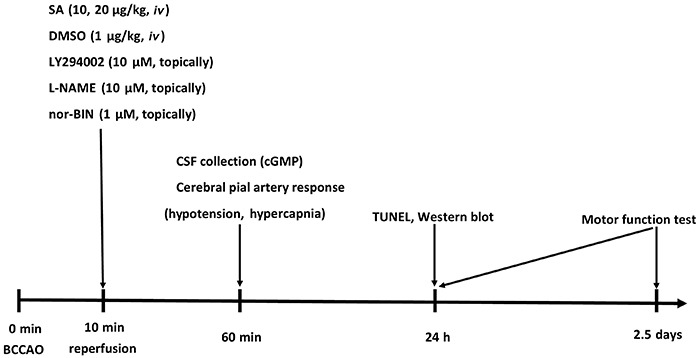 Protocol flowchart. The bilateral common carotid arteries were colligated for 10 min to establish forebrain ischemia followed by <t>reperfusion.</t> SA: salvinorin A; <t>DMSO:</t> dimethyl sulfoxide; nor-BIN: norbinaltorphimine; BCCAO: bilateral common carotid artery occlusion; CSF: cerebrospinal fluid.