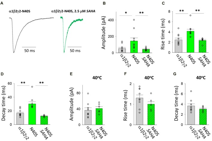 Effects of SAHA and temperature on IPSCs mediated by α1β2γ2 N40S GABA A Rs. (A) Examples of digitally averaged and normalised IPSCs from HEK293 cells transfected with α1, β2 and γ2 N40S subunits with and without SAHA pre-application. (B–D) Effect of SAHA pre-application on the amplitudes, 10%–90% rise times and decay time constants of IPSCs mediated by α1β2γ2 N40S GABA A Rs. The control data for α1β2γ2 and α1β2γ2 N40S GABA A Rs have been replotted from Figure 1 . All data in panels (A–D) were recorded at room temperature (22°C). (E–G) Mean amplitudes, 10%–90% rise times and decay time constants of IPSCs mediated by α1β2γ2 and α1β2γ2 N40S GABA A Rs at 40°C. * p