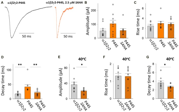 Effects of SAHA and temperature on IPSCs mediated by α1β2γ2 P44S GABA A Rs. (A) Examples of digitally averaged and normalised IPSCs from HEK293 cells transfected with α1, β2 and γ2 P44S subunits with and without SAHA pre-application. (B–D) Effect of SAHA pre-application on the amplitudes, 10%–90% rise times and decay time constants of IPSCs mediated by α1β2γ2 P44S GABA A Rs. The control data for α1β2γ2 and α1β2γ2 P44S GABA A Rs have been replotted from Figure 1 . All results in panels (A–D) were recorded at room temperature (22°C). (E–G) Mean amplitudes, 10%–90% rise times and decay time constants of IPSCs mediated by α1β2γ2 and α1β2γ2 P44S GABA A Rs at 40°C. * p