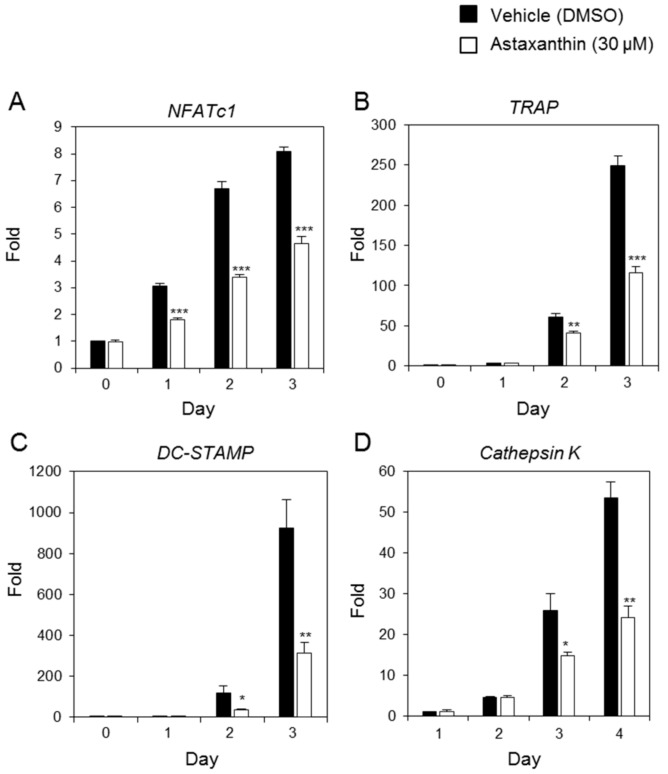 Astaxanthin inhibits the expression of the genes involved in osteoclastogenesis. BMMs were treated with 0.1% DMSO or Astaxanthin (30 μM) and then stimulated with RANKL (10 ng/mL) and M-CSF (30 ng/ml) for the indicated number of days. The expressed mRNA levels of ( A ) NFATc1 , ( B ) TRAP , ( C ) DC-STAMP , and ( D ) cathepsin K were analyzed by real-time PCR compared with the DMSO control. * p