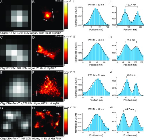 "Single-molecule superresolution imaging of OligoMiner oligos. ( A and B ) Diffraction-limited ( A ) and superresolved STORM ( B ) images of a probe set consisting of 3,678 LDM oligos targeting 1,035 kb at 19p13.2 in human XY 2N PGP-1 fibroblasts. ( C and D ) Diffraction-limited ( C ) and superresolved STORM ( D ) images of a probe set consisting of 104 LDM oligos targeting 20 kb at 19p13.2 in PGP-1 fibroblasts. ( E and F ) Diffraction-limited ( E ) and superresolved DNA-PAINT ( F ) images of a probe set consisting of 4,776 UM oligos targeting 817 kb at Xq28 in human XY 2N MRC-5 fibroblasts. ( G and H ) Diffraction-limited ( G ) and superresolved DNA-PAINT ( H ) images of a probe set consisting of 176 LDM oligos targeting 11 kb of the Xist RNA in human XX 2N WI-38 fibroblasts. ( i – viii ) Normalized single-molecule counts along the indicated 1D line traces (blue bars) and one- or two-component Gaussian fits to the underlying data (black lines). Superresolution data are presented using a ""hot"" color map in which single-molecule localization density scales from black (lowest) to red to yellow to white (highest). (Scale bars: 500 nm.) The minimum and maximum values of detected photons per square nanometer used to set the display scale is shown to right of each superresolution image, and the SD of the Gaussian blur used in the construction of each superresolution image is denoted in the top right corner."