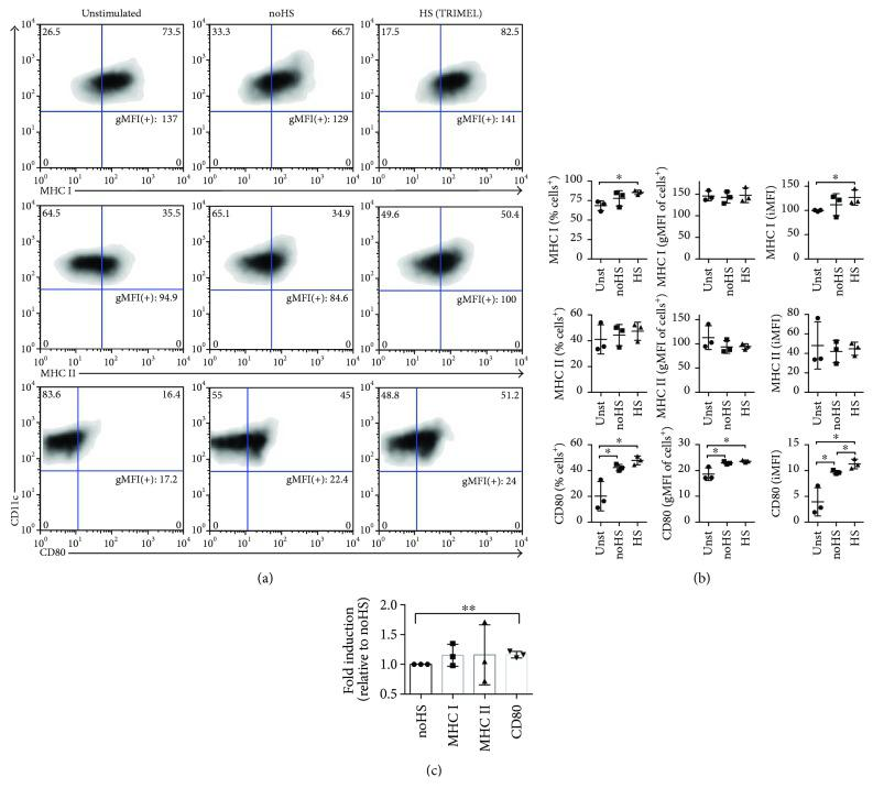 The HS conditioning of TRIMEL melanoma cells contributes to its in vitro DC maturation capacity. Representative density plots (a) and statistical quantification (b) of the DC-associated marker expression MHCI, MHCII, and CD80 in primary human cytokine-activated monocytes stimulated with TRIMEL (HS), or with the same lysate generated without heat shock conditioning (no-HS) (100 μ g/mL) or without lysate (unstimulated (Unst)). (b) The quantification of the maturation marker expression considered the % positive cells, the geometric mean fluorescence intensity (gMFI) of the positive cells, and the integrated MFI (iMFI: % positive cells × gMFI of positive cells/100). The expression of surface markers was assessed by flow cytometry (CD11c + cells were gated). Data represent three independent experiments with PBMC derived from three different stage IV MM patients. (c) Bars indicate the average fold induction and standard deviation (SD) of the iMFI of DC markers relative to monocytes stimulated with no-HS lysate. ∗ p