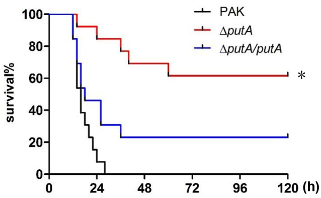 Role of PutA in P. aeruginosa infection in a mouse acute pneumonia model. Mice were inoculated intranasally with 4 × 10 7 CFU bacteria of indicated strains. The mice were monitored for 5 days after the infection. The data were from 13 mice per strain. * p