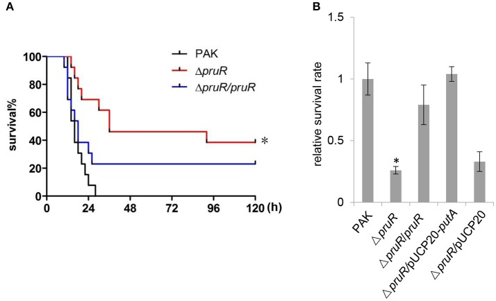 Role of PruR in P. aeruginosa infection in a mouse acute pneumonia model and bacterial resistance to oxidative stress. (A) Mice were inoculated intranasally with 4 × 10 7 CFU bacteria of indicated strains. The mice were monitored for 5 days after the infection. The data were from 13 mice per strain. * p