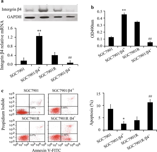 <t>Integrin</t> <t>β4</t> promotes resistance of gastric cancer cell lines to gefitinib. a The expression of integrin β4 with integrin β4 siRNA or over-expressed vector was assayed by Western blot (n = 4) and real-time PCR (n = 4). b The proliferation of gastric cancer cell lines was assayed by MTT (n = 5). c Apoptosis rate was assayed by flow cytometry (n = 4). *P
