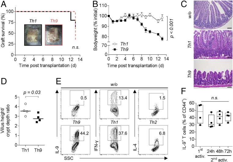 Transfer of Th9 cells into B cell- and T cell-deficient Rag1 −/− mice causes graft rejection, weight loss, and intestinal inflammation. ( A – D ) C57BL/6 Rag1 −/− mice received 1 or 2 × 10 5 activated (CD44 + ) T cells sorted from in vitro differentiated alloreactive C57BL/6 Th1 ( n = 4–5) or Th9 ( n = 4–7) cultures and a BALB/c skin graft on the following day. ( A ) Survival of BALB/c donor skin. A Log-rank (Mantel–Cox) test was applied. ( B ) Body weight of mice depicted as mean ± SEM. P value of the interaction term (group with time) was calculated using an ANOVA type III test after fitting a linear mixed-effect model to the body weight data. ( C ) Representative hematoxylin and eosin stained ileum sections collected on day 12 (w/o) or 13 (Th1, Th9) post skin transplantation. (Scale bar: 100 µm.) ( D ) Villus height-to-crypt depth ratio in ileal mucosa with median value. For statistical analysis, a one-tailed Mann–Whitney test was applied. ( E ) Staining of in vitro differentiated alloreactive (CD44 + ) BALB/c T cells for intracellular expression of signature cytokines. Cells were cultured for 3 d in the absence (w/o) or presence of Th9, Th1, or Th2 polarizing cytokines. ( F ) Intracellular staining for IL-9 in activated (1st activ.) and (with allogeneic dendritic cells) reactivated (2nd activ.) in vitro differentiated alloreactive C57BL/6 Th9 cells ( n = 4). Statistical analysis by Kruskal–Wallis test. n.s., not significant ( P > 0.05).