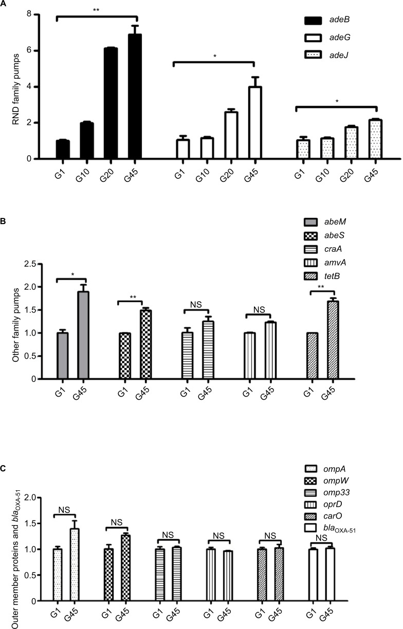 Changes in the relative expression of genes of efflux pump families, outer membrane proteins, and bla OXA-51 under the stress of imipenem resistance between G1, G10, G20, and G45 strains. ( A ) Genes of the RND family of efflux pumps ( adeB , adeG , and adeJ ) in G1, G10, G20, and G45; ( B ) genes of the MATE family of efflux pumps ( abeM ), SMR family of efflux pumps ( abeS ), genes of the MFS family of efflux pumps ( craA , amvA , and tetB ); and ( C ) outer membrane protein genes ( ompA , ompW , omp33 , oprD , and carO ) and bla OXA-51 . * p