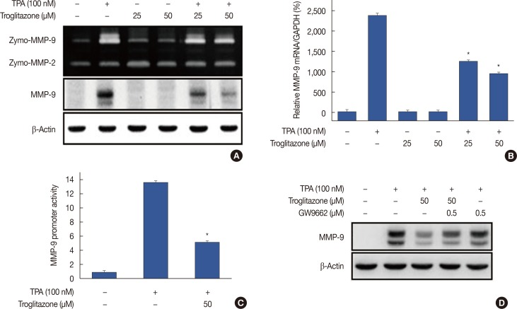 Troglitazone inhibits 12- O -tetradecanoylphorbol-13-acetate (TPA)-induced matrix metalloproteinase-9 (MMP-9) expression in MCF-7 cells. MCF-7 cells were pretreated with troglitazone and then TPA was added for 24 hours. (A) MMP-9 secretion by gelatin zymography (top). MMP-9 protein expression was determined by western blot. β-Actin was the internal control (bottom). (B) MMP-9 mRNA was analyzed by real-time polymerase chain reaction with glyceraldehyde 3-phosphate dehydrogenase (GAPDH) as the internal control. (C) Wild type MMP-9-luc reporters and a Renilla luciferase thymidine kinase reporter vector were co-transfected into MCF-7 cells. Cells were treated with troglitazone and TPA and MMP-9 promoter activity was measured with dual-luciferase reporter assays. (D) Peroxisome proliferator-activated receptor γ antagonist GW9662 was added to cells for 30 minutes before troglitazone treatment. Lysates were analyzed by western blot with anti-MMP-9. β-Actin was the loading control. Values are mean±standard error of the mean of three independent experiments. * p
