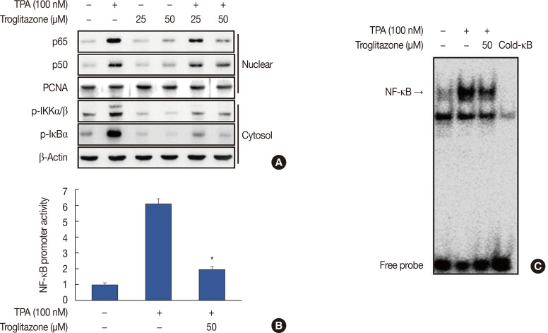 Troglitazone inhibits 12- O -tetradecanoylphorbol-13-acetate (TPA)-induced nuclear factor κB (NF-κB) activation in MCF-7 cells. (A) Cells were treated with troglitazone with TPA and nuclear extracts were prepared after 3 hours. Translocation of p65 and p50 into the nucleus and phosphorylation of IκB kinase (IKK) α/β and nuclear factor of κ light polypeptide gene enhancer in B cells inhibitor (IκB) α in cytosol was determined by western blots. Proliferating cell nuclear antigen (PCNA) was the loading control for nuclear proteins. (B) NF-κB-luc reporters and a Renilla luciferase thymidine kinase reporter vector were co-transfected into MCF-7 cells. Cells were treated with troglitazone with TPA and NF-κB promoter activity was measured with dual-luciferase reporter assays. (C) Cells were treated with troglitazone with TPA and nuclear extracts made after 3 hours. NF-κB DNA binding was analyzed by electrophoretic mobility shift assay. Values are mean±standard error of the mean of three independent experiments. * p