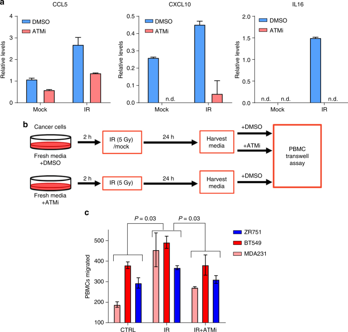 Phosphorylation of ATM induces cytokine secretion and PBMC migration. a Quantification of CCL5, CXCL10, and IL16 secretion by ELISA following irradiation of BT549 breast cancer cells either in presence or absence of ATM inhibitor KU-55933 at 10 μM. Values plotted as mean ± std of duplicate spots. See Supplementary Fig. 7 . b Schematic for collection of conditioned media for PBMC <t>transwells.</t> Final concentration of ATM inhibitor KU-55933 was equal in all conditions (10 μM). c Migration of PBMCs towards tumor cell conditioned media from triple negative breast cancer cell lines MDA-MB-231 and BT-549 and luminal breast cancer cell lines ZR-75-1. Error bars represent ± standard deviation of duplicate runs. Significance determined by ANOVA using a Holm-Sidak post-hoc test