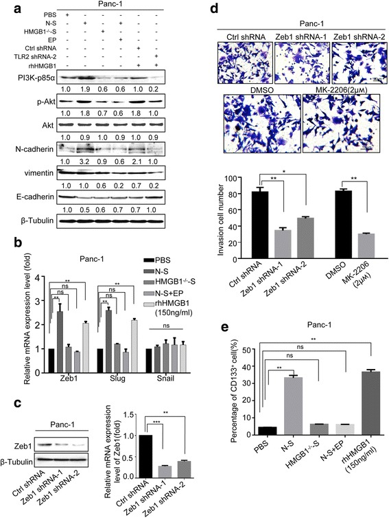 PI3K/Akt pathway and EMT program was responsible for the dying cell derived HMGB1 mediating metastasis. a Western blot analyzing the expression of PI3K-p85α, p-Akt, N-cadherin, vimentin, and E-cadherin in Panc-1 cells treated with PBS, N-S, HMGB1 −/− -S, N-S + EP, and rhHMGB1 (150 ng/mL). β-Tubulin was a loading control. b RT-PCR analyzing the expression of EMT-related transcriptional factors Zeb1, Slug, and Snail in Panc-1 cells treated with PBS, N-S, HMGB1 −/− -S, N-S + EP, and rhHMGB1 (150 ng/mL). GAPDH was a loading control. c Western blot showing the shRNA-knockdown efficiency of Zeb1. β-Tubulin was a loading control. d The invasion ability of Panc-1 cells following Zeb1 knockdown or treated with DMSO: MK2206 (AKT phosphorylation inhibitor) in the presence of rhHMGB1 (150 ng/mL) was detected by transwell assay. Magnification: × 20. Experiments were repeated three times and the data were expressed as mean ± SEM. * p