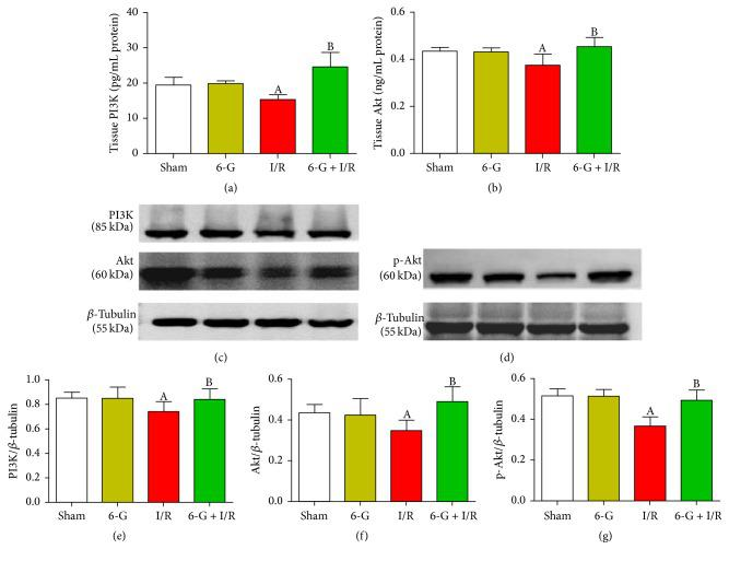 Pretreatment with 6-G (6 mg/kg) activated the PI3K/Akt signaling pathway. ((a) and (b)) PI3K and Akt activities in myocardial homogenates detected by ELISA. ((c) and (d)) The expression level of PI3K, p-Akt, and Akt in the myocardial tissues detected using western blot and quantitative analyses ((e), (f), and (g)). Note that A P